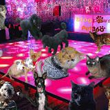 Cats and Dogs Disco