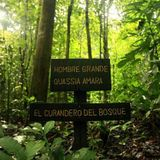 Djdannyc Forest Life