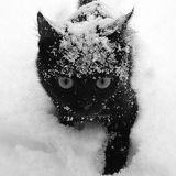 Die Kitten Tape 9