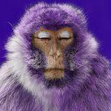 Purple Monkey (Special Merkaba Tribute mix) by Holomood