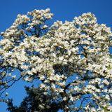 Klayman - Spring (Live @ Lesson Zero 2014-04-04)