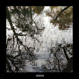 Finetooth #172 - Late Autumn