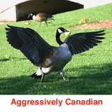 Aggressively Canadian (Canada Day 2015 Mix)