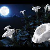 Pejzaże Twilight Zone - Muzyką i Słowem Malowane: Księżycowy Ogród