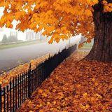 An Autumn Antidote 3