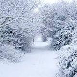 Feb SnowTrap Mix