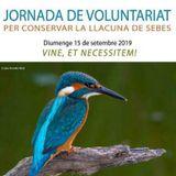 Jornada de voluntariat a la llacuna de la Reserva Natural de Sebes