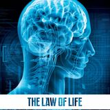 AUDIOMIND - Law of Life