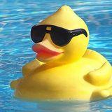 Swimming Summer Duck Mix