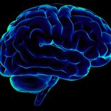 yorda-lost brain