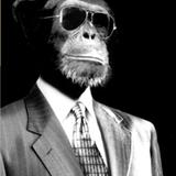 The Lo-Fi Swinger Monkey