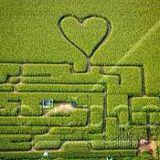 Labyrinth im Maisfeld