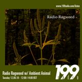 12/06/18 - Radio Ragweed w/ Ambient Animal