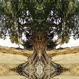 Lutz Thuns + Michael Brückner - The Silent Scent of Olives Part 2 - Live Session