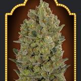 Medical Marijuana RedEye-O