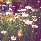 Spring mix 2k17