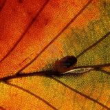 Savoir Podcast Series 004 - Qindek's Autumn Story