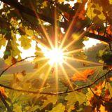 Amazing Golden Autumn