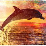 Delfino Oceano