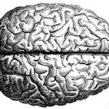 Brainbox (Tracks from Motorlab catalog)