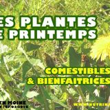 Printemps : plantes comestibles et bienfaitrices (2018-03-27)