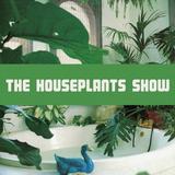 Houseplants (02/09/2019)