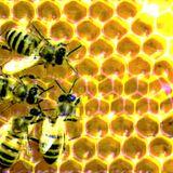 Дмитрий Хаустов - Басня о пчёлах (Б. Мандевиль)