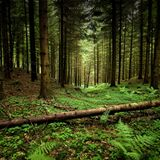Abyss deep dive presents : Forests Echos by @ Saks