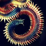 Psychotease-Riki Razo DJ