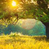 Obliviouz - Lost In A Meadow