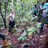 The Nigerian Montane Forest (Mambilla plateau) - an interview with Dr Hazel Chapman
