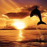 Bora Bora Sunset Vol 3!