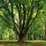 Gothenburg112 Mixtape-A Tree In A Forest(Musik 4 The Wicked Mix)