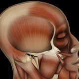 Anatomical Damage