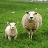 Hard Stuff For Lambs And Ewes #prequel : Back from a far country