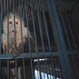 MonkeyTimeRadioHour_26-Sept-2012