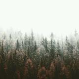 acid rain .ep2
