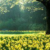 ManoMIKSAS 019: A Spring View