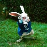 don t follow the white rabbit...