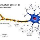 Universo En Expansión: Comunicación Celular Parte 2: Neuronas