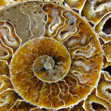 Ammonites Music Electronic experience.mixed by Julian Murgui