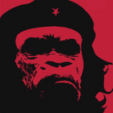 isuamadog - Gorilla Music 3/9/19