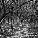 Darkcloudsarefloating (Winter 2008 Mixtape)