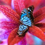 Schmetterling (Butterfly Boucher - Riz MC - RUN DMT - System Of Survival - Krazy Baldhead)