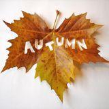 Qby - Autumn