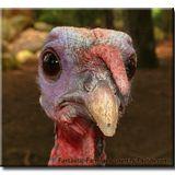Turkey day mix