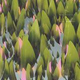 Log 0044 - Glade