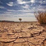 Dry Desert Soul...