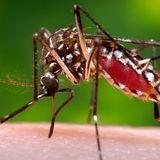 Caso de dengue en Urbana