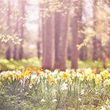 Spring Feelings 2016